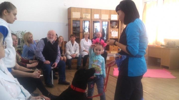 Прописали лабрадора: юных челябинцев с аутизмом начнут лечить с помощью собаки