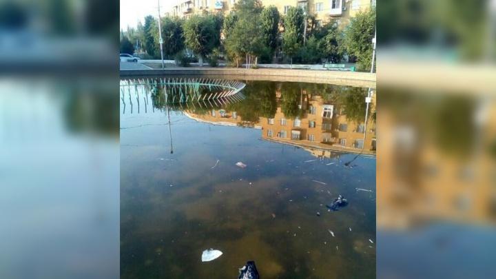 Волгоградцы возмущены превращением фонтана в Советском районе в помойку