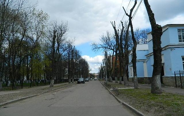 Экологи Ярославля о деревьях-обрубках: они не выживут