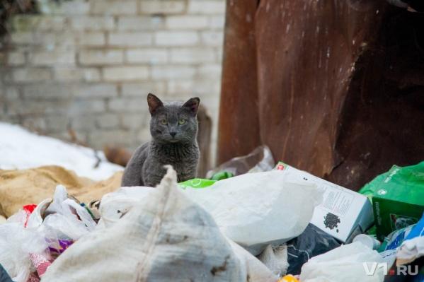 А вот некоторые коты предпочитают вольную жизнь