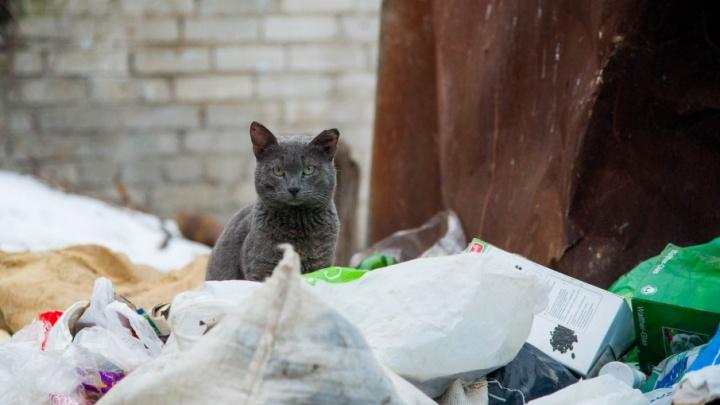 Жители Весёлой балки в Волгограде, утопая в мусоре, ждут нашествия динозавров