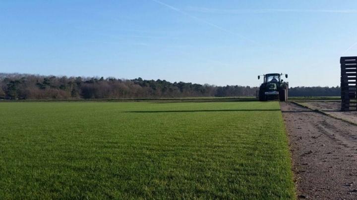 Привезут на 22 грузовиках: в Германии срезали газон для «Самара Арены»