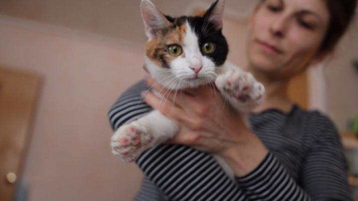 Умри, но не сейчас: как корреспондент Ufa1 спасала раненых котят