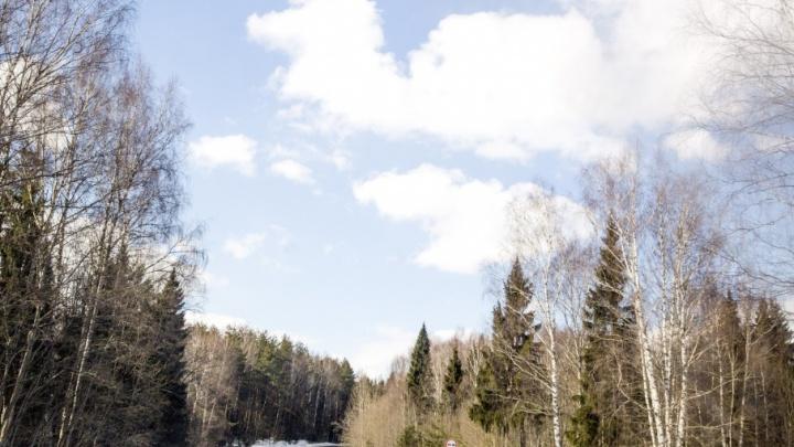В Ярославской области запретили стрелять в кабанов. Но разрешили в глухарей