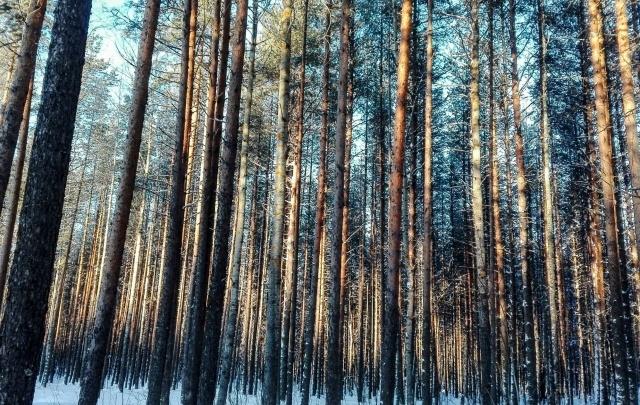 Сезон открыт: в Прикамье проснулись клещи