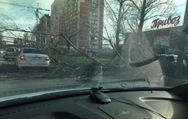 В районе рынка «Привоз» на дорогу упало дерево: пострадали две машины
