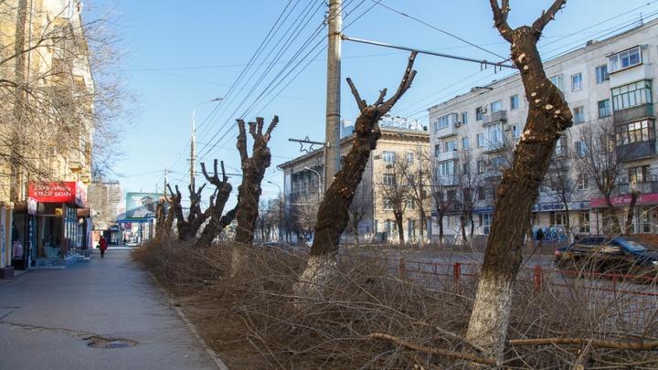 В Волгограде снова варварски пилят деревья