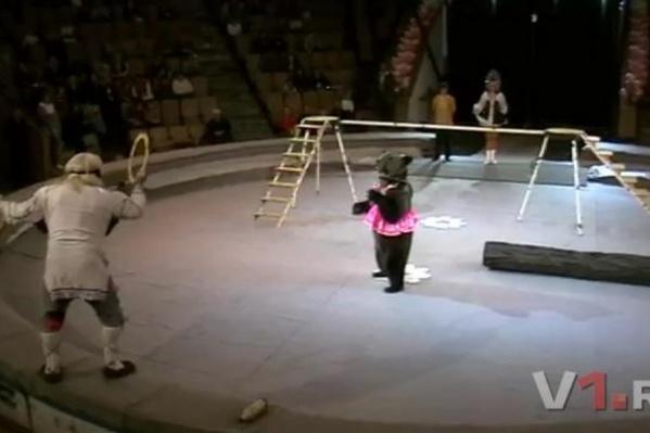 Рая с Егором 20 лет честно трудились в цирке. А потом их хозяина уволили, а животных предложили поселить на балконе