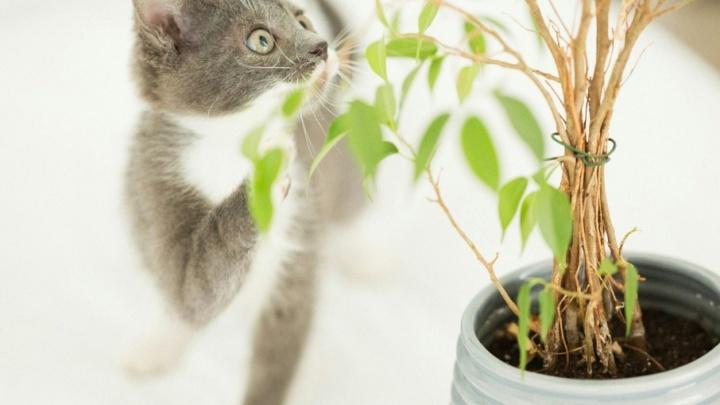 Челябинские фотографы устроили гламурные фотосессии для бездомных кошек