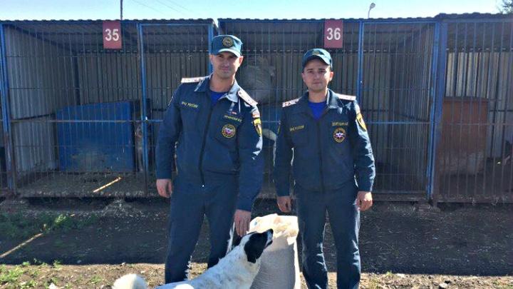 Каша для Мурок и Бобиков: тюменские пожарные накормили бездомных животных