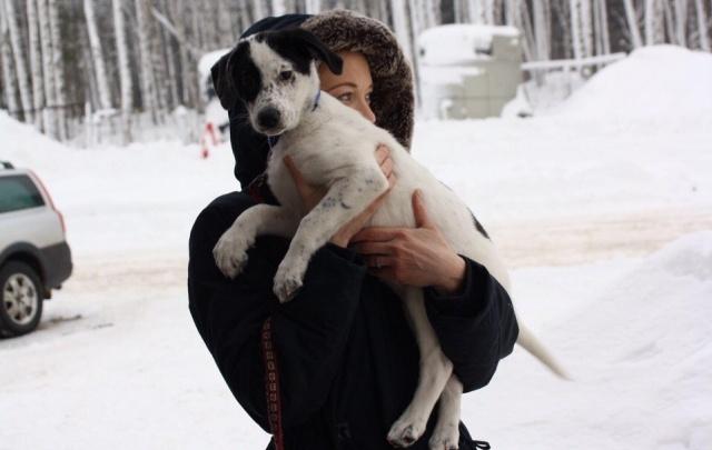 В Ярославле пройдет выставка бездомных животных
