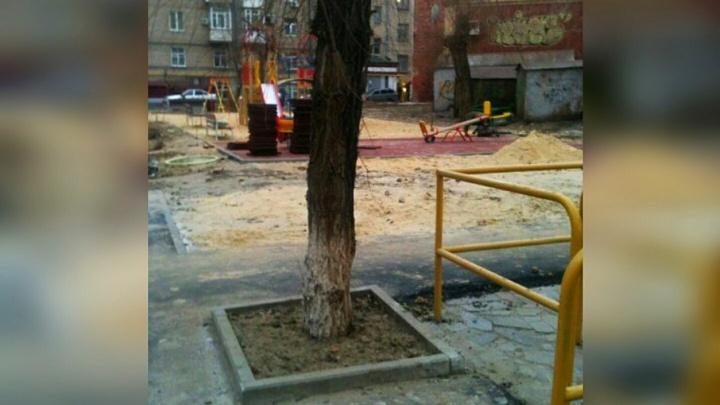 В центре Волгограда спасли замурованное в асфальт дерево