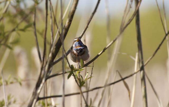 Каких птиц можно встретить в тюменских парках и лесах: от болотной совы до пухляков