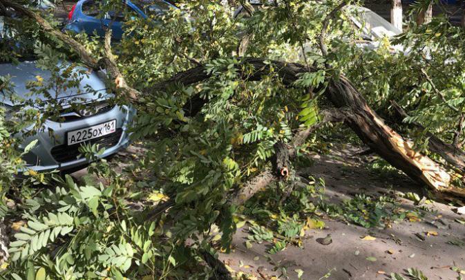 В Ростове из-за сильного ветра дерево рухнуло на машину