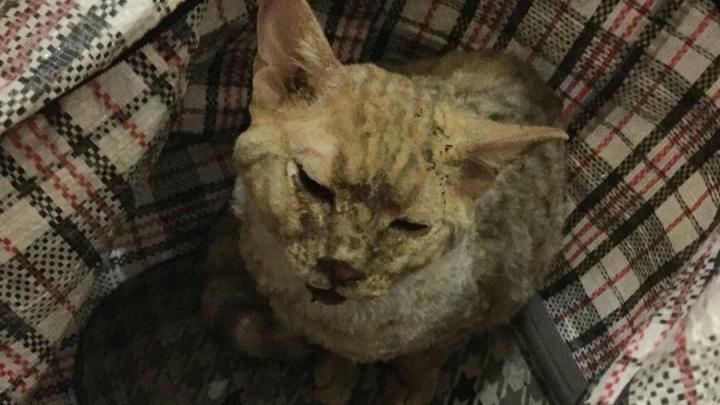 Выпрыгнувшую из горящей квартиры на Садовой кошку приютили в театре