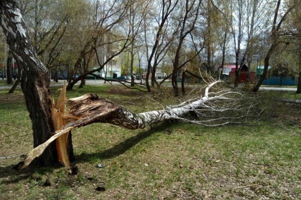 Ветер сломал около сотни деревьев