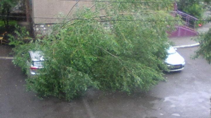На северо-западе Челябинска деревом накрыло четыре автомобиля