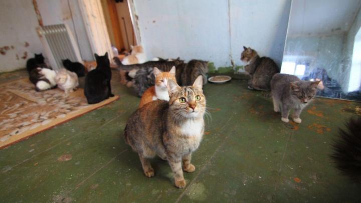 Полиция отказалась возбуждать уголовное дело по факту поджога приюта для животных в Самаре
