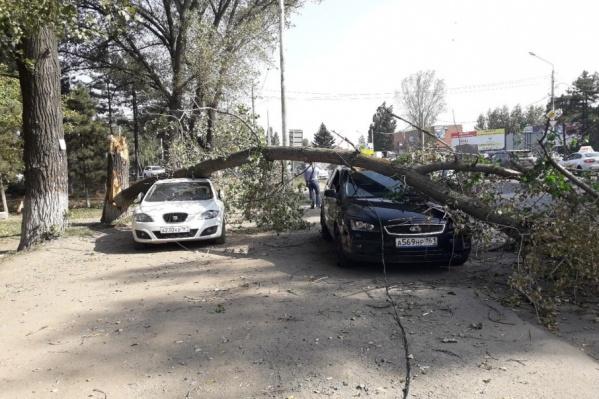 В Ростове привыкли к тому, что во время ветра деревья падают на машины