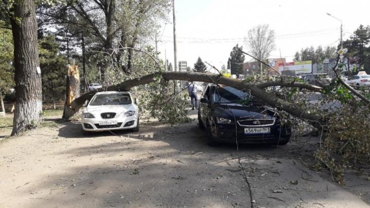 Не под тем деревом припарковались: в Ростове тополь рухнул на две иномарки