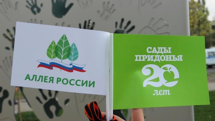 «Сады Придонья» обеспечили полив всех деревьев на Аллее России