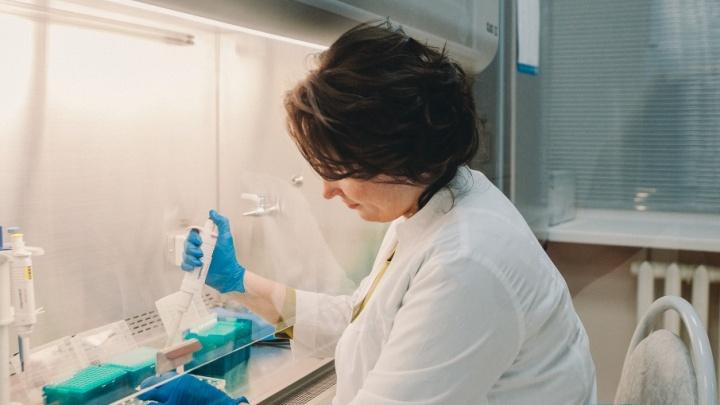 ДНК, порошковый металл, африканские клещи, ловушки для мух: чем занимаются тюменские ученые