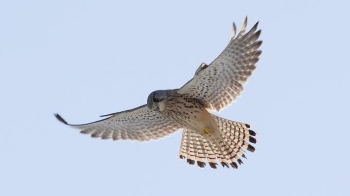 В Волгограде Мамаев курган приютил зимних птиц