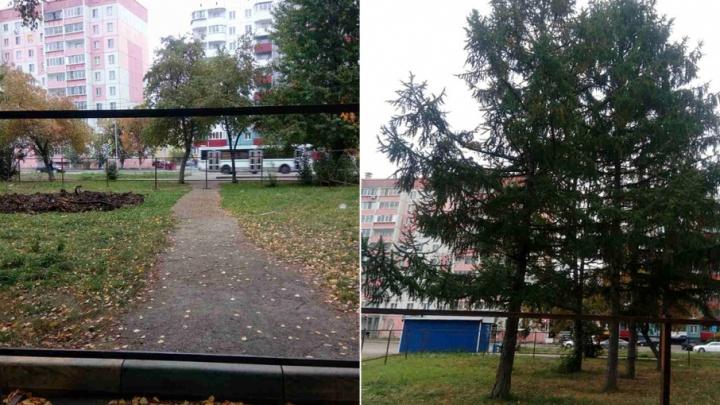 «Работают по ночам, вывезли дерево»: газон в челябинском дворе обнесли строительным забором