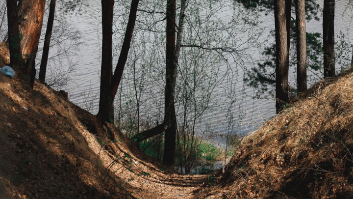 Лыжные трассы и бесплатный Wi-Fi: тюменцы рассказали, что хотят видеть в Гилевской роще
