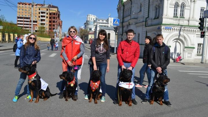 Собаководов Тюмени приглашают принять участие в параде Победы