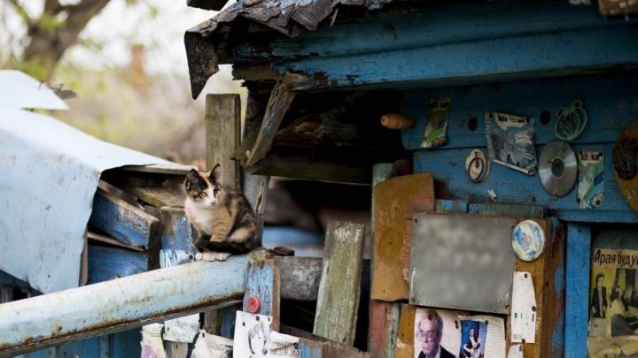 Волонтёры ищут новых хозяев для кошек ветерана из землянки