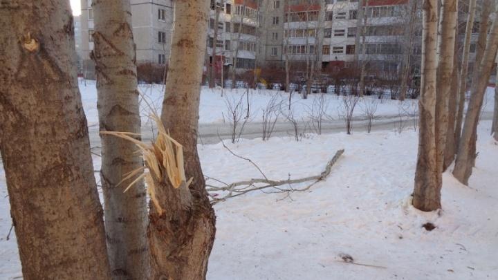 Аварийная бригада компании «Тепло Тюмени» поломала деревья и кустарники на Московском тракте
