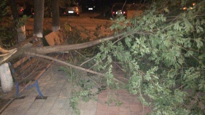 В Волгограде и Волжском ураган повалил деревья