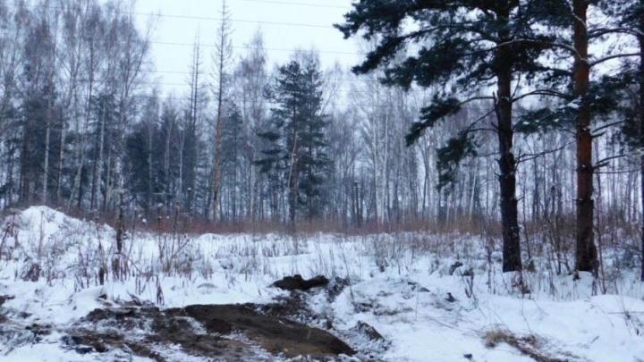 Ярославскую область в этом году замусорили сотнями свалок