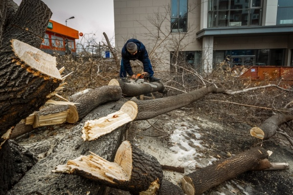 Деревья и кустарники уничтожили в Тракторозаводском районе
