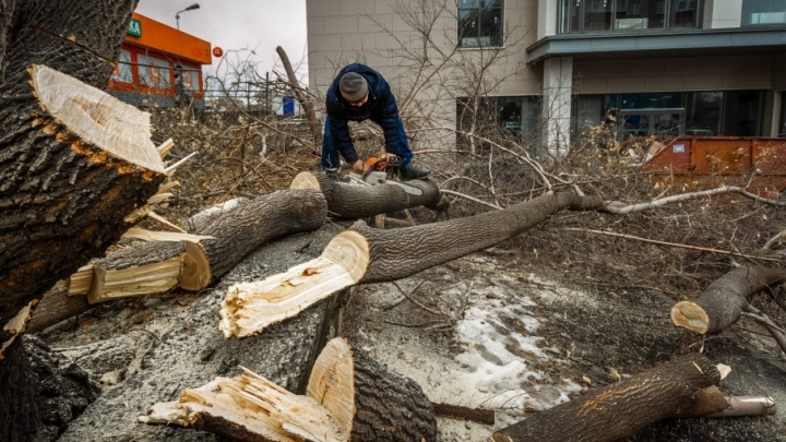 Поиском виновного в вырубке 85 деревьев в Челябинске займётся полиция