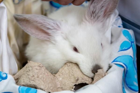 Кролики — это не только свежее мясо, но и способ заработать