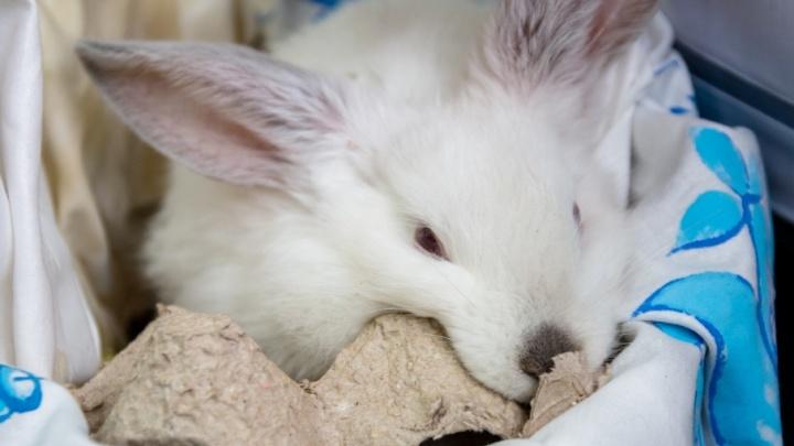 Зэки-фермеры: в колониях Самарской области выращивают кроликов, свиней и птиц