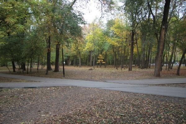 В парке Островского скоро вырубят 270 деревьев