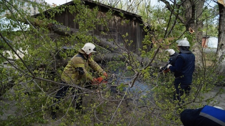 В Сызрани упавшая ветка тополя искалечила двух местных жителей