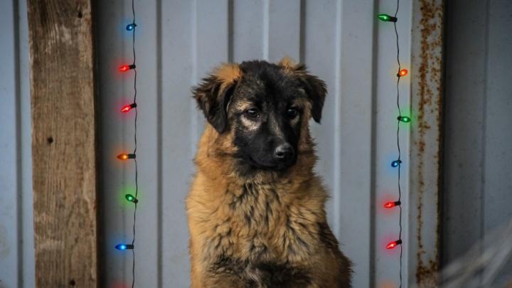 Чудо для символа года: 11 брошенных псов Ростова, мечтающих встретить Новый год в любящей семье