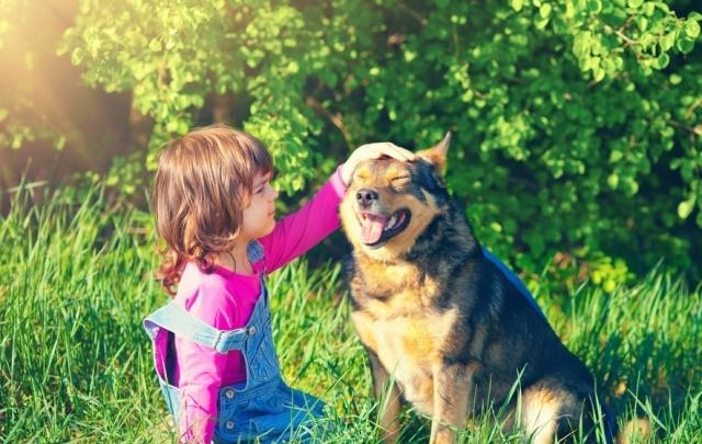 Клещи атакуют: как уберечь собаку от паразита