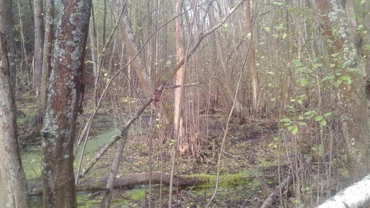 Полицейские вынесли из леса пенсионерку, которая сломала ногу и осталась без связи