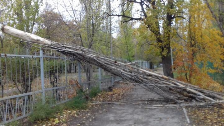 Волгоградцы показывают последствия циклона «Гриша»