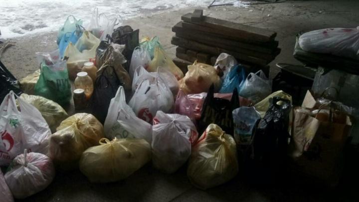 Жители Самары собрали для брошенных медведей 50 пакетов с едой
