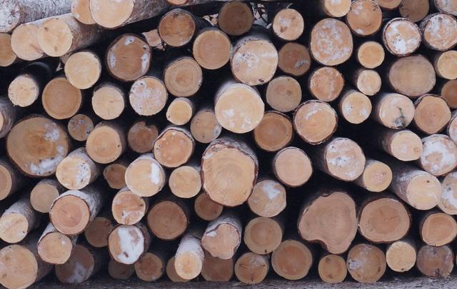 Леспромхозы ГК «Титан» заготовили 713,9 тысячи кубометров древесины