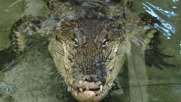 В зоосаду прошло традиционное показательное кормление рептилий