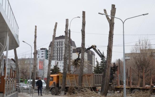 Подрядчика, подстригшего деревья около нового McDonalds на Мориса Тореза «под столб», оштрафуют