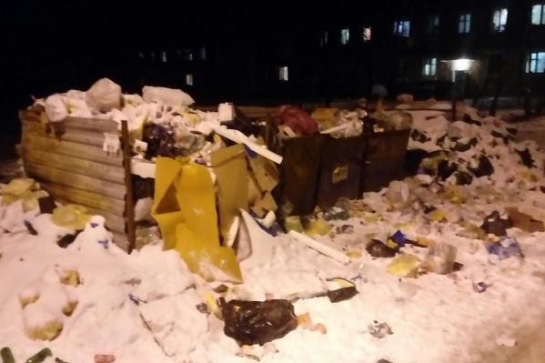 Собаки разорвали все упакованные мешки с мусором
