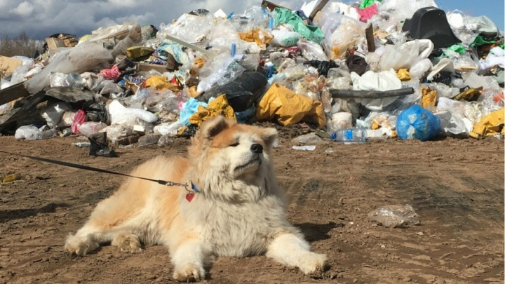 Кто ответит за опасный мусор: чиновники порылись в незаконной свалке